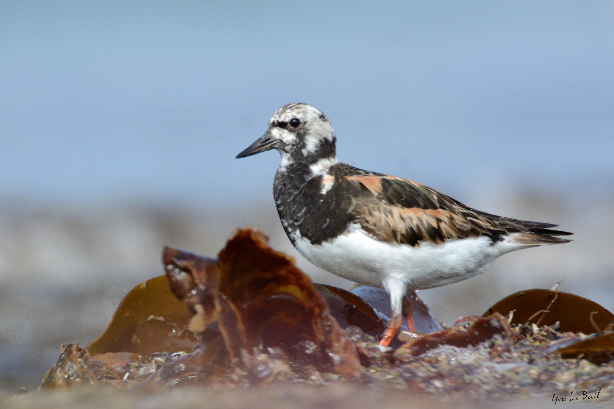 rencontres ornithologiques bretonnes que dire site de rencontre
