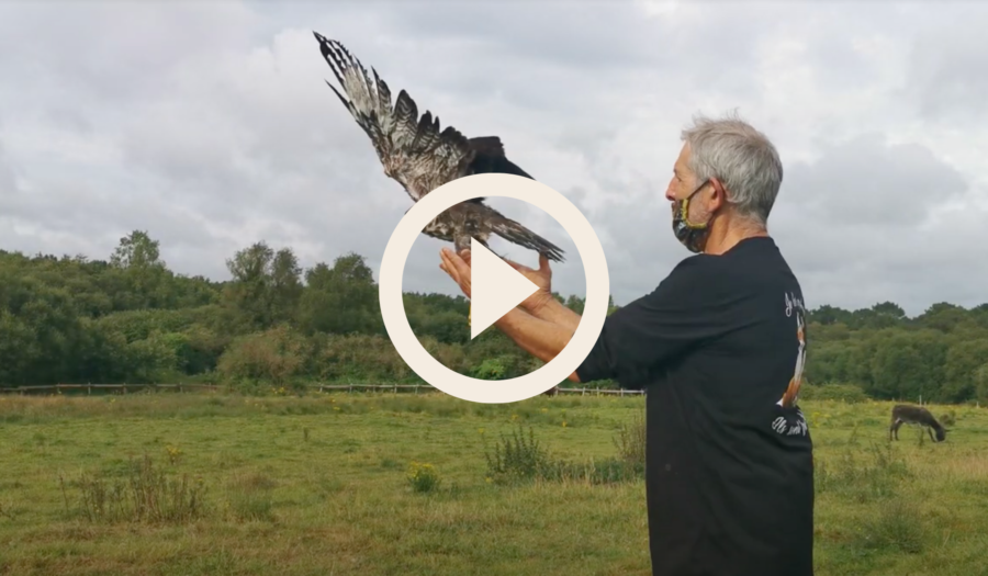 La protection de la faune sauvage ou quand les piafs nous volent dans les plumes