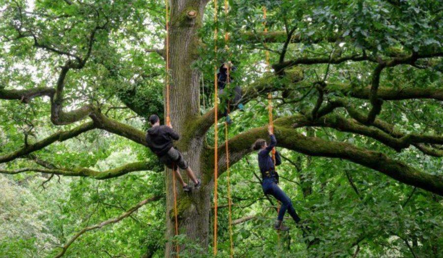 [Événement Fête de la Nature] L'arbre, un patrimoine à découvrir !