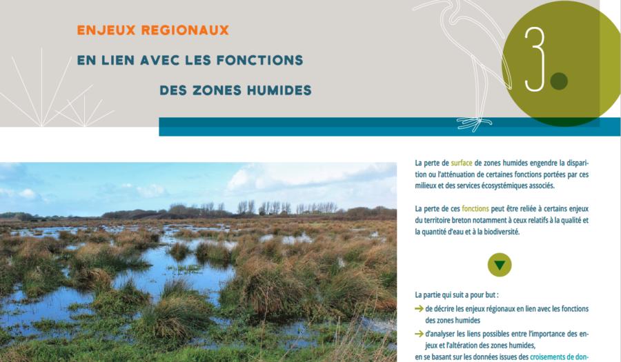 Un rapport pour tout savoir sur les zones humides en Bretagne : état des lieux de leur altération, enjeux et restauration💧